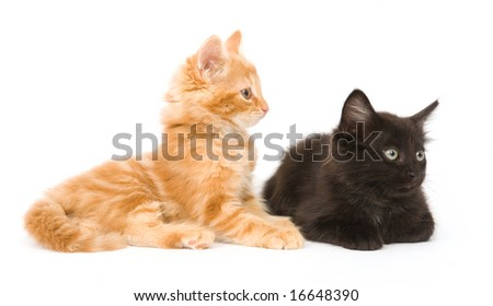 A yellow and black kitten sitting next to each other on a white background - stock photo