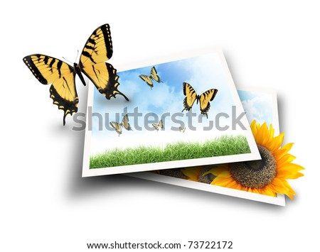 A yellow butterfly is flying out of a photograph picture of a nature scene with clouds and grass. The second photo has a sunflower popping out and growing. - stock photo