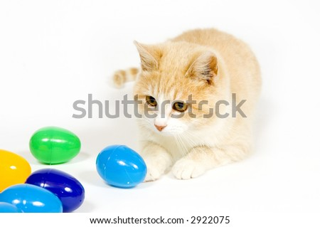 A Yellow Cat Plays With Plastic Easter Eggs On White Background