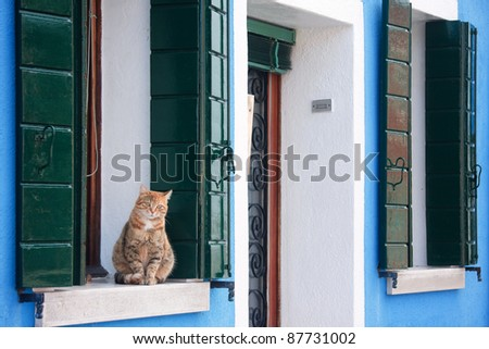 A yellow cat sitting on the window sill at a house in Burano, Italy - stock photo