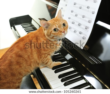 A yellow cute cat playing the piano - stock photo
