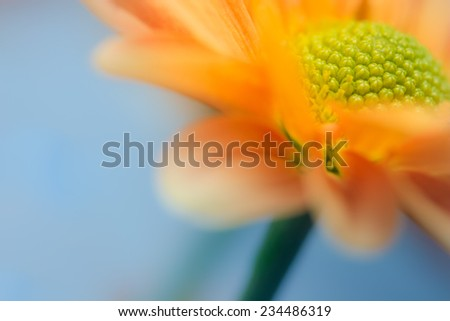 A yellow daisy in shallow depth of field. - stock photo