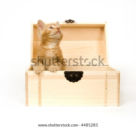 A yellow kitten sits inside of a wooden box on white background.