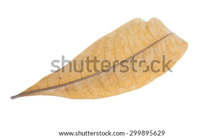 A yellow leaf isolated on white - stock photo