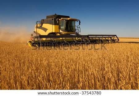 A yellow modern combine harvester working in a wheat field - stock photo