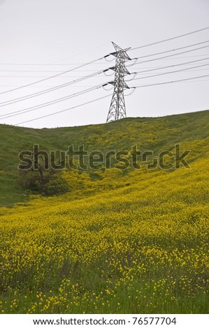 A yellow mustard field and oak tree under an electrical power transmission tower. - stock photo