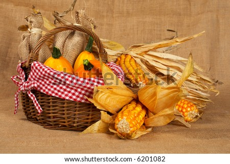 A yellow pumpkins and sacs in the basket and cobs, over burlap background. Shallow DOF