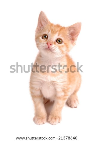 A yellow tabby kitten looking up.
