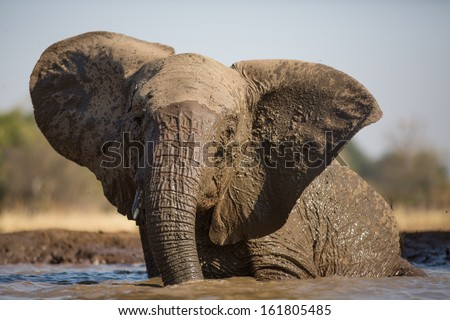 A young African elephant having a mud bath in a waterhole - stock photo