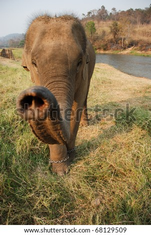 A young baby elephant in Thailand - stock photo