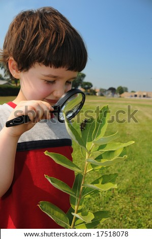 A young boy, in about first grade, looks closely at a caterpillar on the leaf of a milkweed plant with a school in the background - stock photo