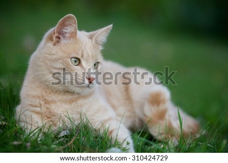 A young cat lying on green grass in the garden