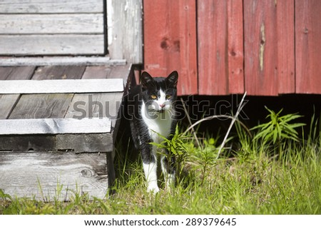 A young cat standing in front of the barn. - stock photo