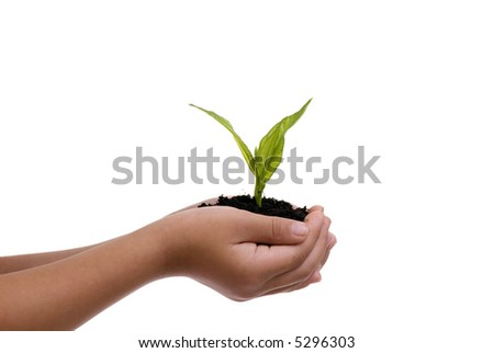 A young child hold a small seedling in her hands.