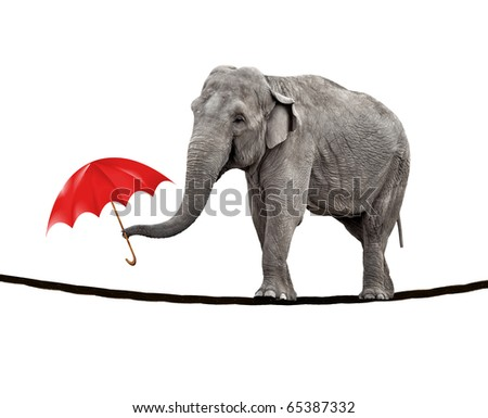A young circus elephant walking on a tightrope and carrying a red umbrella. - stock photo