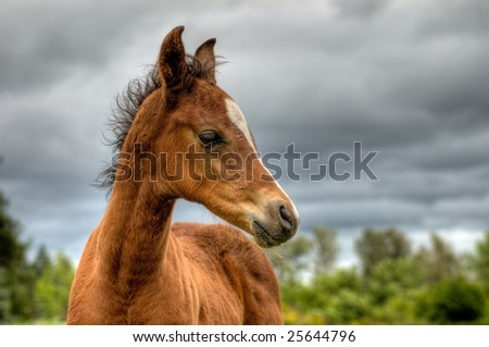 A young colt posed against a storm cloud background. - stock photo