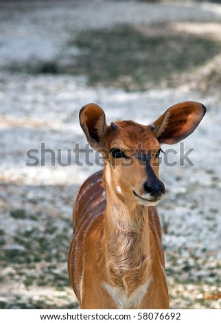 A young deer with ears listen to the danger
