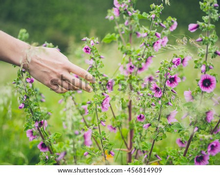 A young female hand is touching some flowers in a meadow in the summer