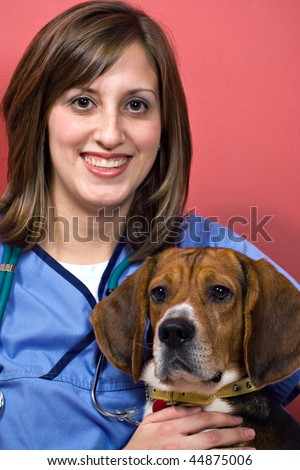 A young female veterinarian woman holding a beagle dog. - stock photo