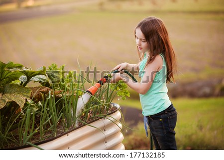 A young girl is watering her vegetable garden outdoors with a hose. - stock photo