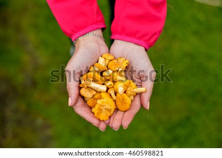 A young girl with manicured nails holding a handful of edible yellow mushrooms, chanterelle