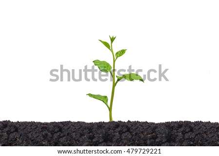 A young green plant growing on black soil isolated