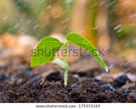 A young green plant with water on it growing out of brown soil. - stock photo