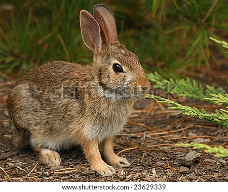 A young hare in a forest clearing - stock photo