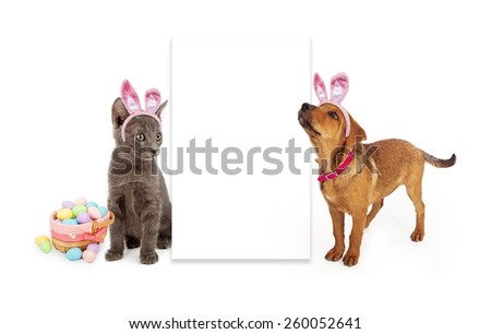 A young kitten and puppy sitting to the side of a blank white sign wearing Easter Bunny ears with a basket of colorful eggs - stock photo