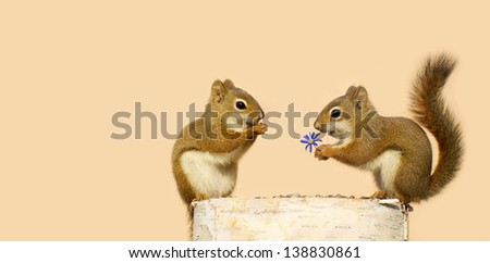 A young male squirrel offering a flower to a happy looking pretty little female while perched on a log in the spring, with copy space. - stock photo