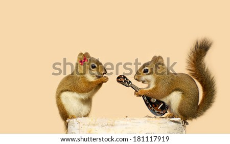 A young male squirrel playing a love song for his sweetheart, on his lute. Part of a fun series. - stock photo