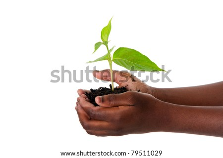 A young new plant growing from palm in hands of African child, isolated. Drought on Earth concept. - stock photo