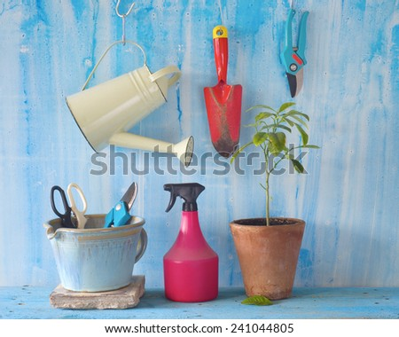 A young plant with gardening tools, springtime gardening concept - stock photo
