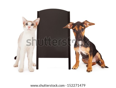 A young puppy and a kitten standing on the sides of a blank, clean, black chalkboard A-frame sign.  - stock photo