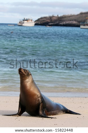 A young Sea Lion rests on the warm sands of Santa Fe island, Ecuador - stock photo