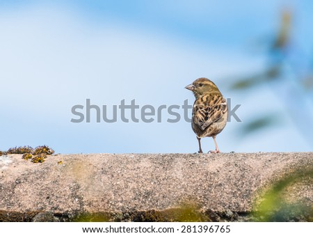 A young sparrow sits on a garage roof waiting for food to be delivered. - stock photo