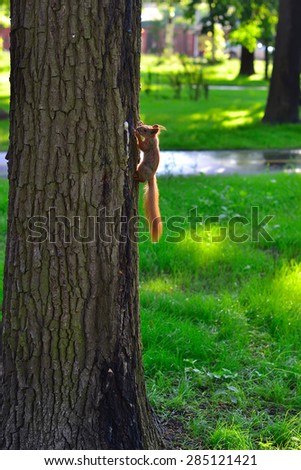 A young squirrel in the park in the trees
