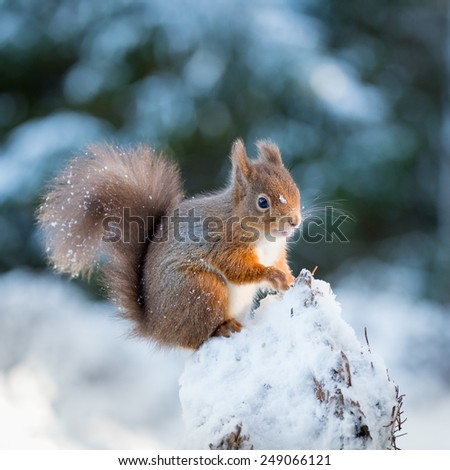 A young squirrel kitten searching for food - stock photo