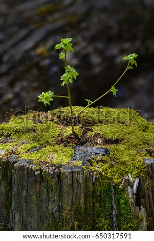 how to stop tree sprouts from stump