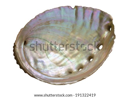 abalone shell pearly inside isolated on white - stock photo