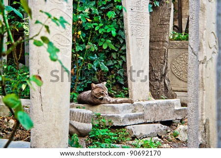 abandon cat lying in the graveyard in Istanbul - stock photo