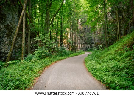 Abandoned asphalt road in a deep green forest with rocks