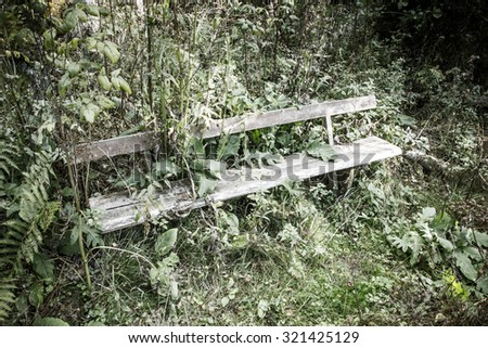 Abandoned bench in forest jungle.