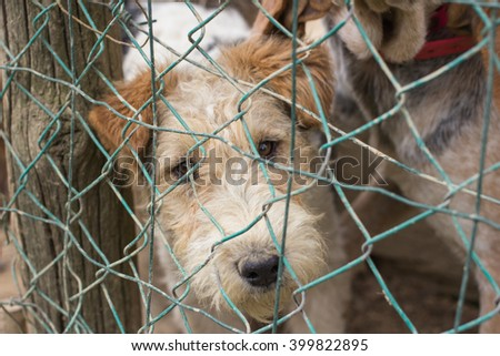Abandoned dog in a cage.