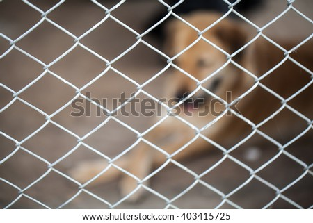 abandoned dog locked in a cage