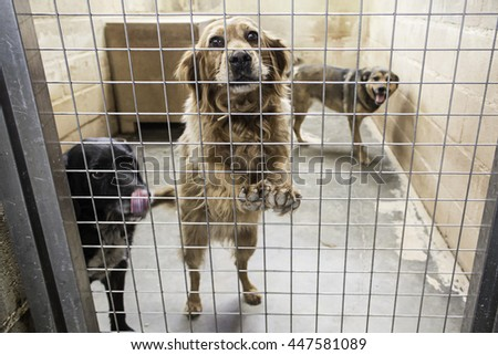 Abandoned dogs in the kennel, animals