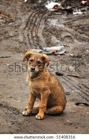 Abandoned, frightened young dog, left alone at the street. - stock photo
