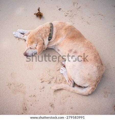 Abandoned homeless stray dog sleeping on the sand - stock photo
