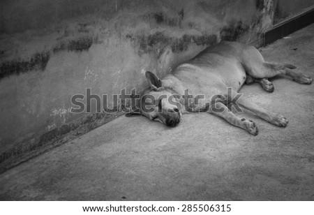 Abandoned homeless stray dog sleeping on the street. - stock photo