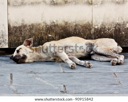 Abandoned homeless stray dog sleeping on the street - stock photo